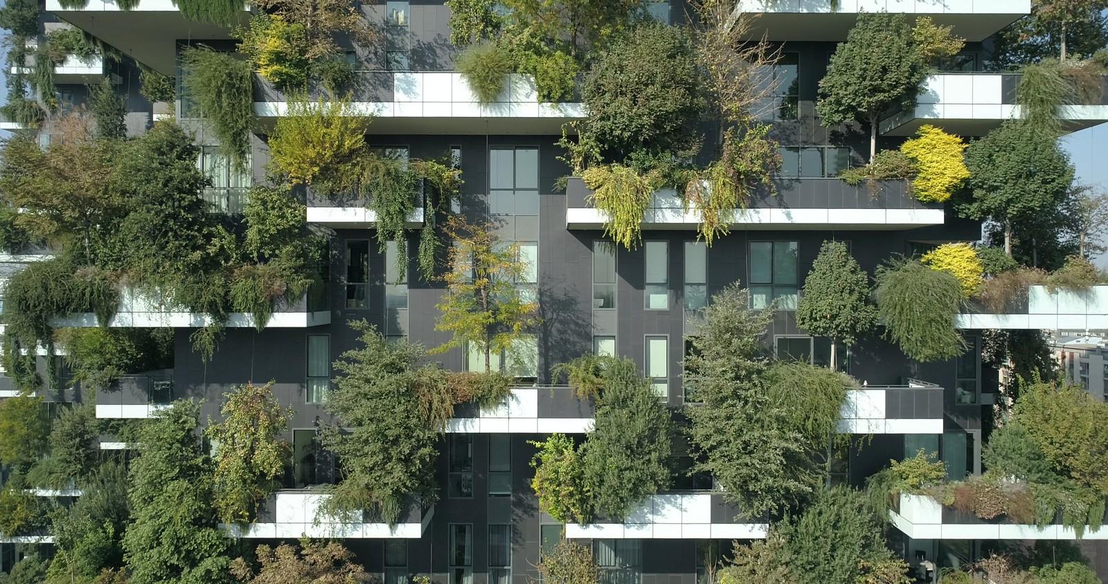 Fassadenbegrünung trägt im Sommer durch Verdunstungskälte zur Abkühlung in der Stadt bei.